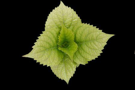 leaves , leaves,