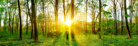 Photo for Forest in spring with sunbeams - Royalty Free Image