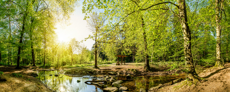 Forest panorama with creek and sun