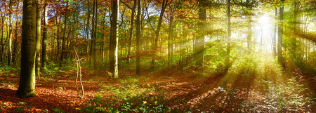 Photo pour Autumn forest with sun rays - image libre de droit
