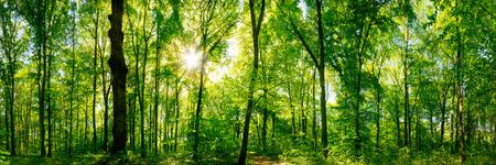 Photo pour Forest panorama with sun - image libre de droit