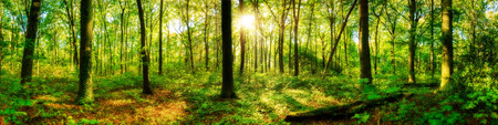 Photo for Forest panorama with sun - Royalty Free Image