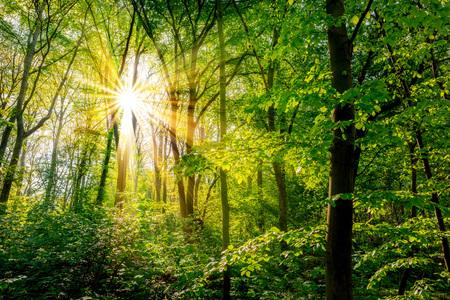 Wald im FrÌhling mit grÌnen BÀumen und strahlender Sonne