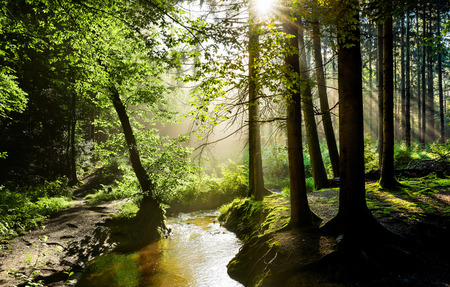 Beautiful sunrise in a misty forest with sunbeams shining through the trees