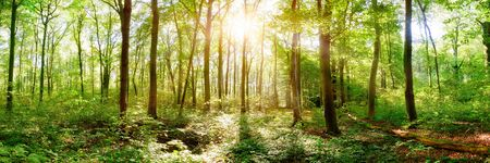 Photo pour Spring forest with bright sun shining through the trees - image libre de droit