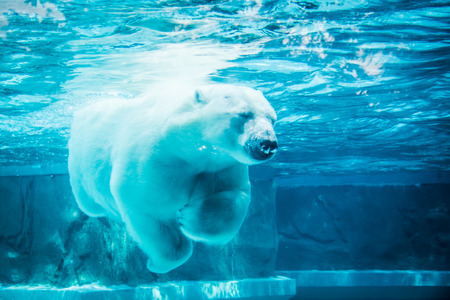 Photo pour Polar bear in dream - image libre de droit