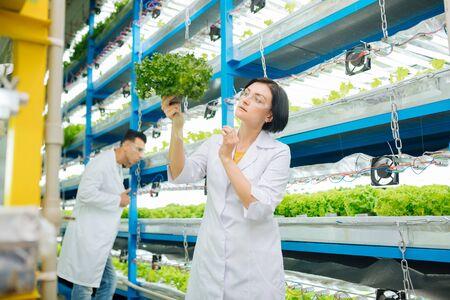 Growing lettuce. Female and male agriculturists working in greenhouse growing lettuce