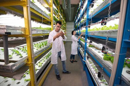 Standing between shelves. Two professional agriculturists standing between shelves with green in the greenhouse
