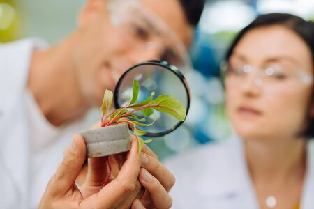 Looking at greens. Close up of male and female professional agriculturists looking at greens