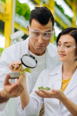 Couple of agriculturists. Couple of agriculturists studying greens using magnifying glass in the greenhouse