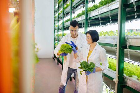 Agriculturists feeling joyful. Couple of agriculturists feeling joyful while working in greenhouse together