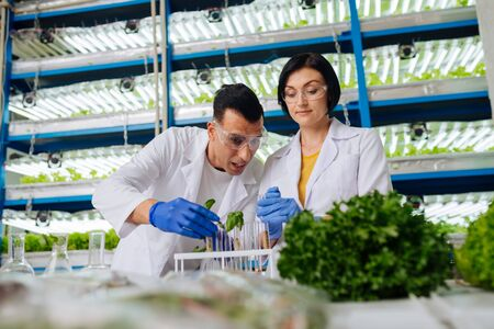 Agriculturists analyzing. Man and woman wearing blue gloves working in greenhouse analyzing seeds