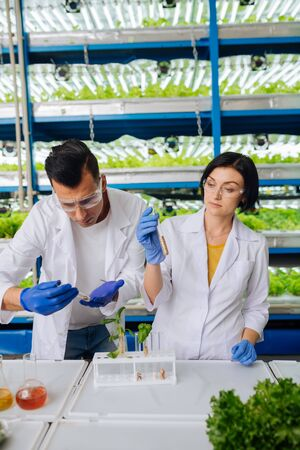 Studying seeds. Agriculturists wearing blue gloves standing near table and studying seeds