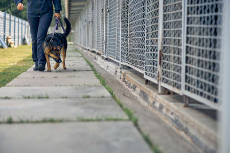 Photo for Security guard with detection dog strolling down concrete footpath and inspecting cages for storage - Royalty Free Image