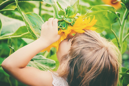 Photo for child in the field of sunflowers is a small farmer. selective focus. nature. - Royalty Free Image