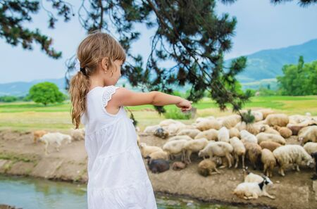 Foto de A child looks at a flock of sheep. Travel in Georgia. Selective focus. - Imagen libre de derechos