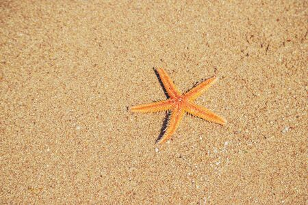 Photo for starfish on the beach on the sand. Selective focus. nature. - Royalty Free Image