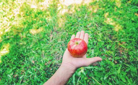 Photo for Man gardener picks apples in the garden in the garden. Selective focus. nature. - Royalty Free Image