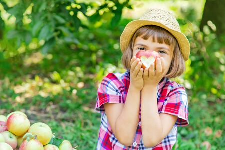 Photo for child picks apples in the garden in the garden. Selective focus. - Royalty Free Image