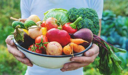 Foto für Man farmer with homemade vegetables in his hands. Selective focus. nature. - Lizenzfreies Bild