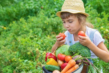Foto für Child in the garden with vegetables in his hands. Selective focus. nature. - Lizenzfreies Bild