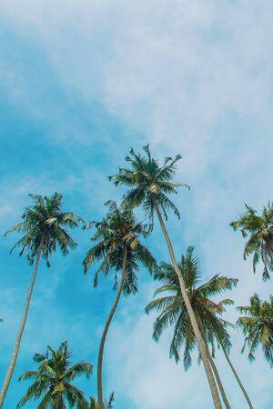 Photo pour Coconut trees on the island. Selective focus. nature. - image libre de droit