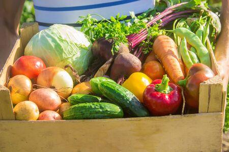 Photo pour A man with vegetables in the garden. Selective focus. nature. - image libre de droit