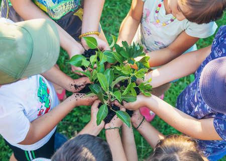 Photo pour Children hold the earth and trees in their hands. Selective focus. nature. - image libre de droit