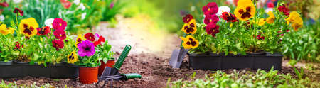 Photo for Planting a flower garden, spring summer. Selective focus. nature. - Royalty Free Image