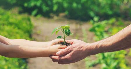Photo pour A child with his father plant a nursery garden. Selective focus. people. - image libre de droit