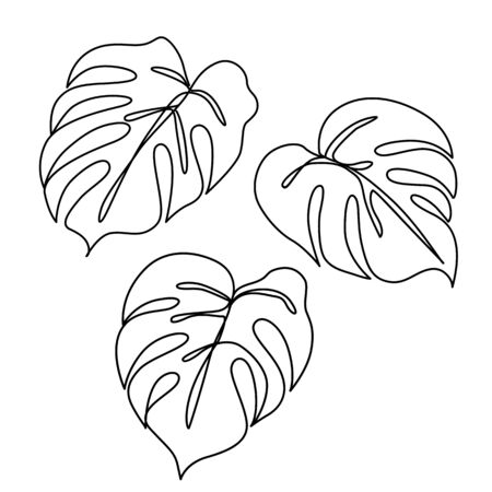 Continuous Line Monstera Leaves Set Tropical Leaves Contour Drawing One Line Outline Illustration Isolated On White Modern Minimalist Art Single Simple Hand Drawn Decorative Sketch Royalty Free Vector Graphics 40 high quality collection of tropical leaves clipart by clipartmag. tropical leaves contour drawing