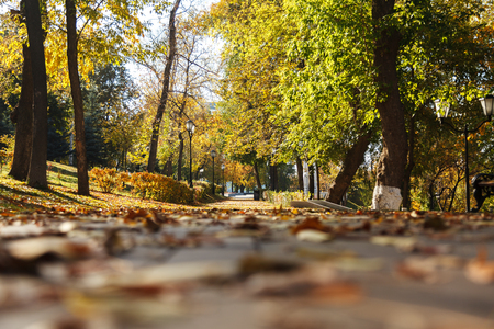 Photo pour Dry yellow leaves on the sidewalk in the autumn Sunny Park. Bottom view. Selective focus. - image libre de droit