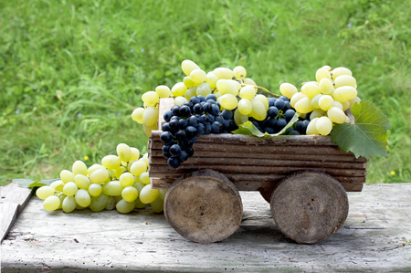 Big clusters of ripe blue and green grapes in a wooden box