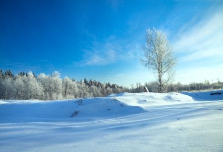 Photo pour beautiful winter rural landscape with the blue sky and the wood - image libre de droit