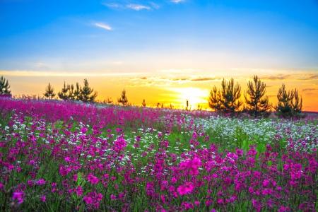 Sunrise and flowers scenery