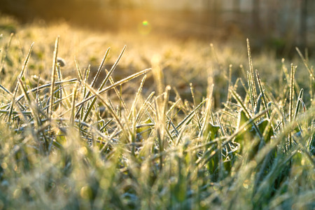 abstract background from a grass covered with hoarfrost,soft focus. rime on grass blur background. scene autumn meadow and sun  shines. rural landscape with sunrise