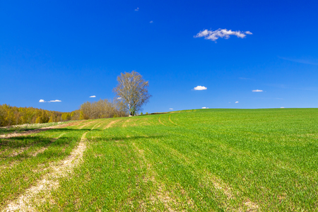 beautiful spring rural landscape with field and blue sky. agricultural field  view.