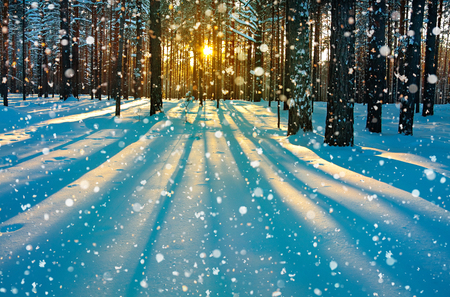 Photo pour beautiful winter rural landscape with forest, sun and snow. sunset in winter forest. sun rays shine through trees. wintry sunrise - image libre de droit