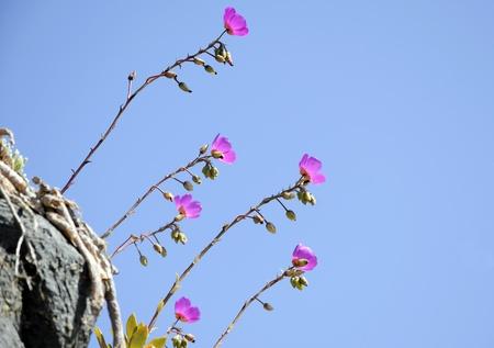 Flores silvestres en la roca