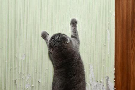 Photo pour Cat tears wallpaper. Cat sharpens nails. Pet harms the home - image libre de droit