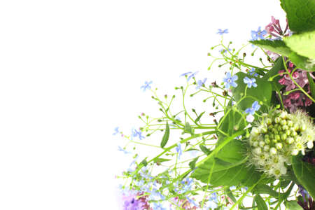 Photo pour A bright bouquet of delicate spring or early summer flowers, close-up, white background. Top view, flat lay, place for text, copy space. - image libre de droit
