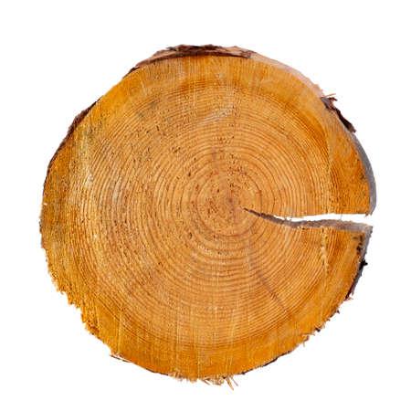 Foto de Saw cut of a coniferous tree close-up on a white background, isolate. Top view, flat lay, place for text, copy space. - Imagen libre de derechos