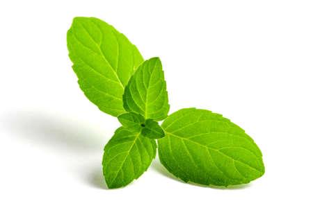 Photo pour Mint green leaves close-up on a white background, isolate. - image libre de droit