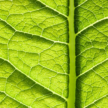 Green leaf texture. Abstract spring background