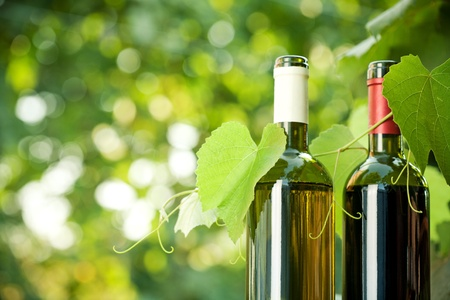 Photo pour Red and white wine bottles and young vine against natural spring background - image libre de droit