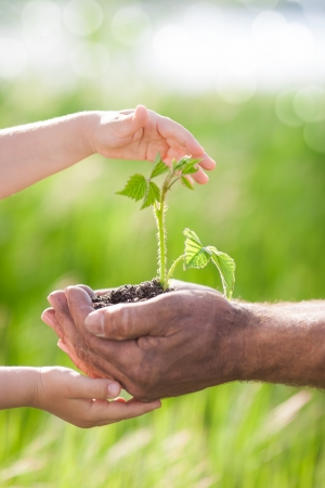 Human hands holding young plant against spring green background  Ecology concept