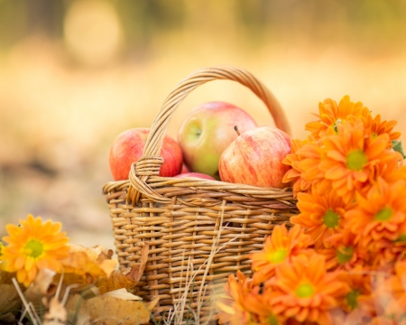Basket full of red juicy apples and flowers in autumn garden