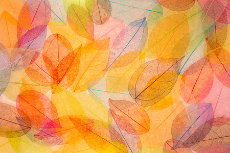 Autumn background. Fall leaves textureの写真素材