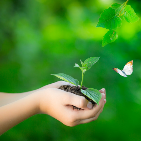 Photo for Child holding young plant in hands against spring green background. Ecology concept. Earth day - Royalty Free Image