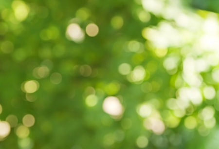 background in spring green colors, bokeh diffuse effect